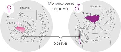 Простуда мочеполовой системы у мужчин